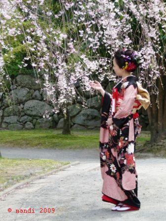 Hanami, cherry blossom viewing, in a kimono