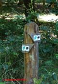 The  beech forest trail in Serrahn
