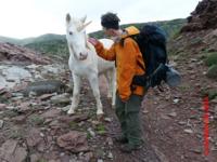 Unicorn on Menorca's north coast