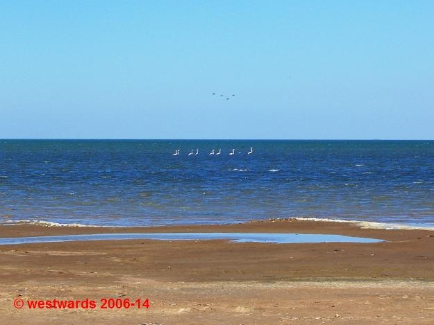 Pink flamingos on Lake Tengiz in Kazakhstan