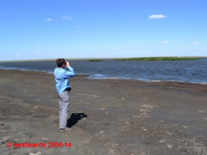 Birdwatching on Lake Sumai near Korgalzhyn