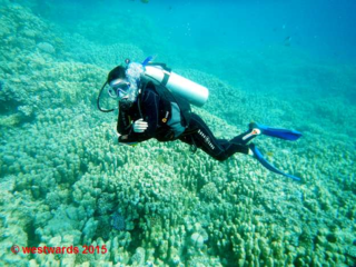 SSI Open Water Diver lesson at Soma Bay