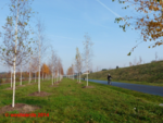 Berlin Wall Cycling Path / Mauerradweg near Altglienicke